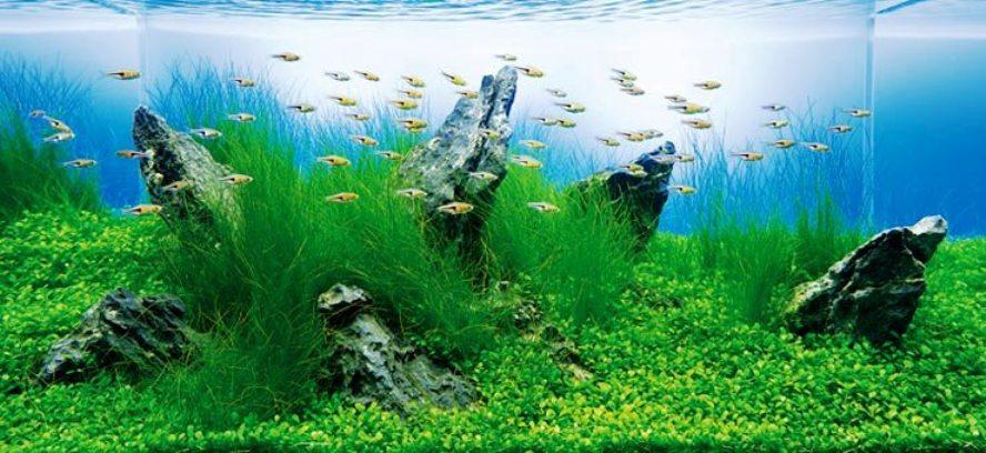 Лучшие лекарства от стресса – в интернет магазине аквариумов!